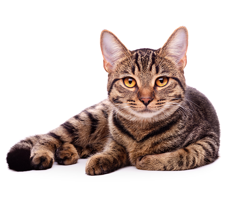 Cat Pet Poisons