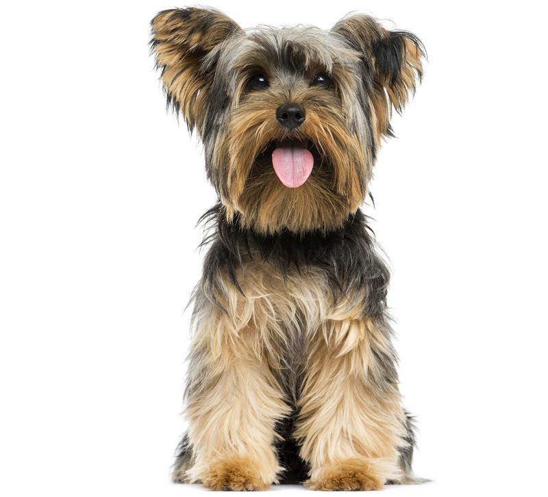 Dog Pet Poisons