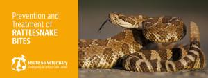 Prevention and Treatment of Rattlesnake Bites