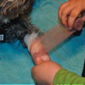 Basic pet wound dressing step 3