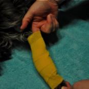 Basic pet wound dressing step 5
