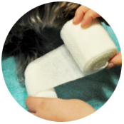 Basic pet wound dressing step 2