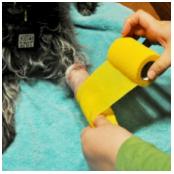 Basic pet wound dressing step 4